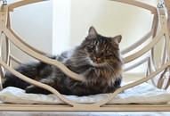 Wood Bed for Cats Pets Wood Basket Cat Furniture Cat Swing Cat Cave Cat Shelter Cat Hammock
